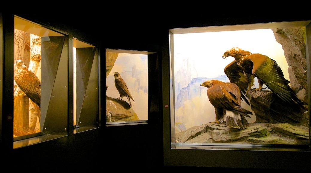 Museu de História Natural de Berna que inclui vistas internas