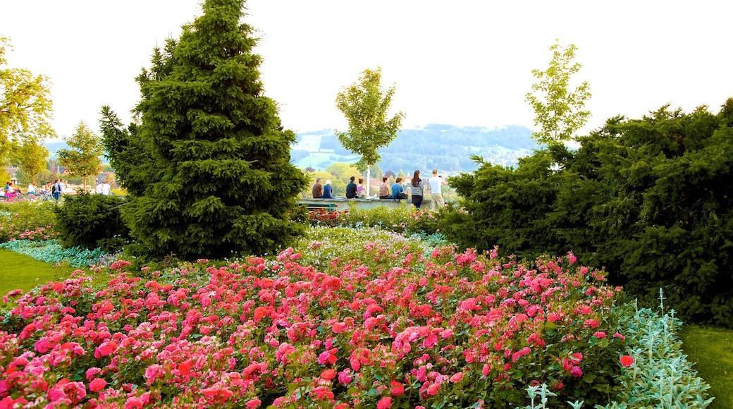 Bern Rose Garden caracterizando flores silvestres, um jardim e flores