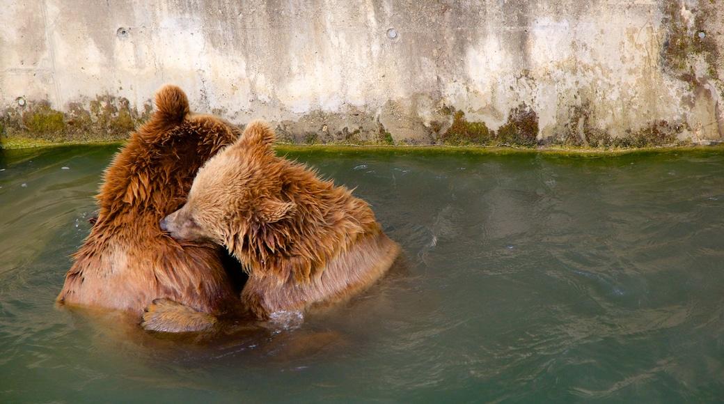 Fosa de los osos ofreciendo animales peligrosos y animales del zoo