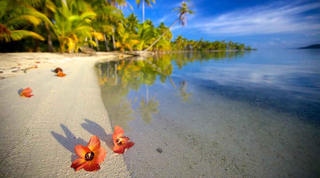 Tahití mostrando flores y una playa