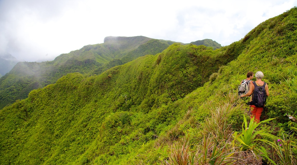 Tahití ofreciendo senderismo o caminata, selva y vistas de paisajes