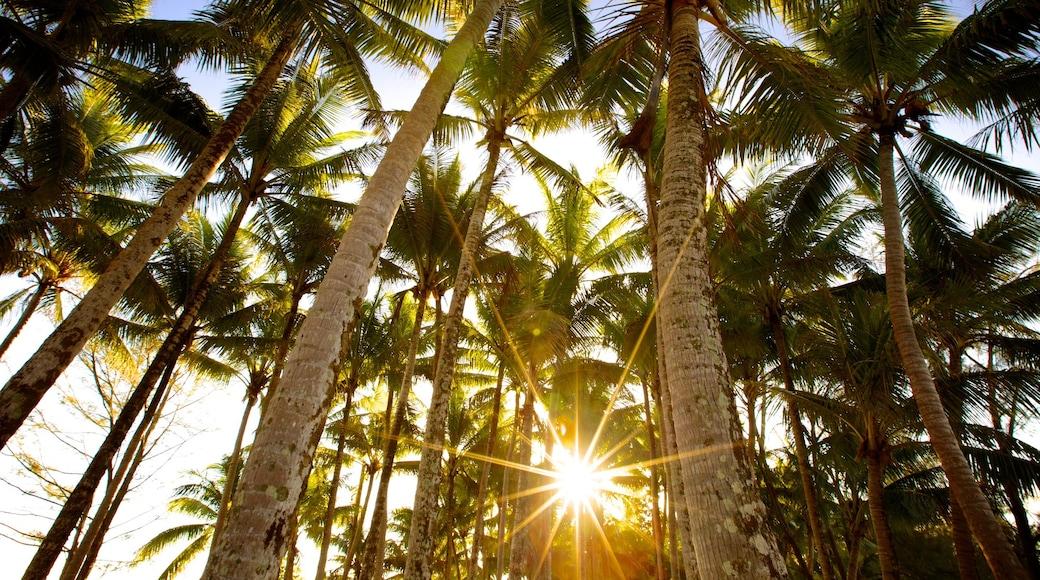 Tahiti montrant scènes tropicales et coucher de soleil