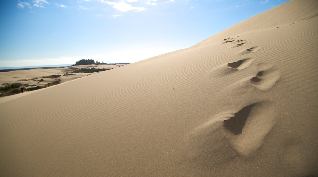 Reedsport featuring desert views and landscape views