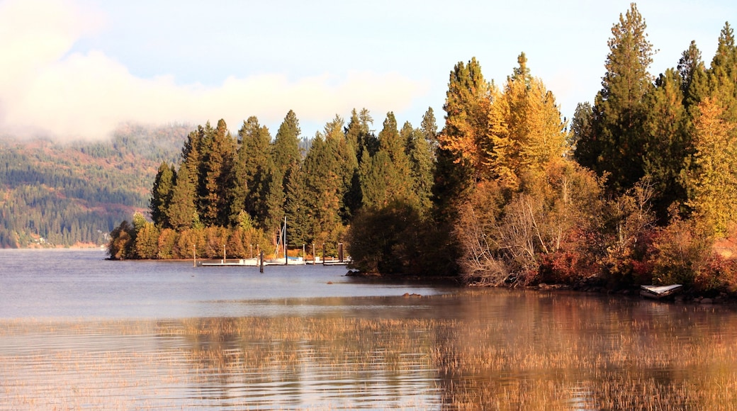 Coeur d\'Alene featuring forest scenes, fall colors and a lake or waterhole