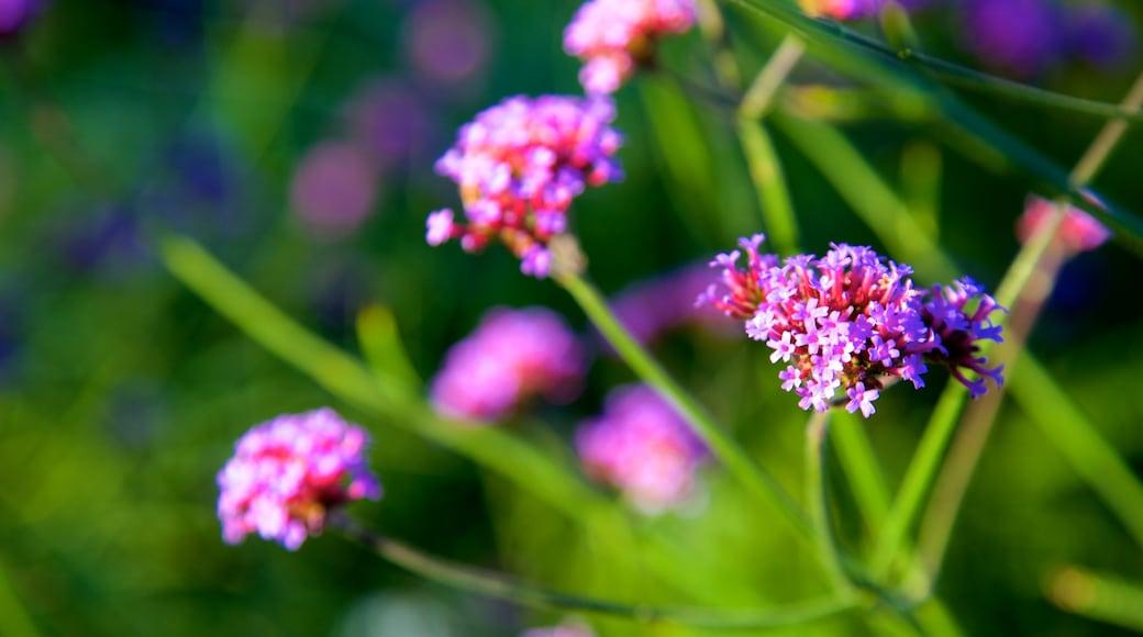 Azalea Park featuring flowers