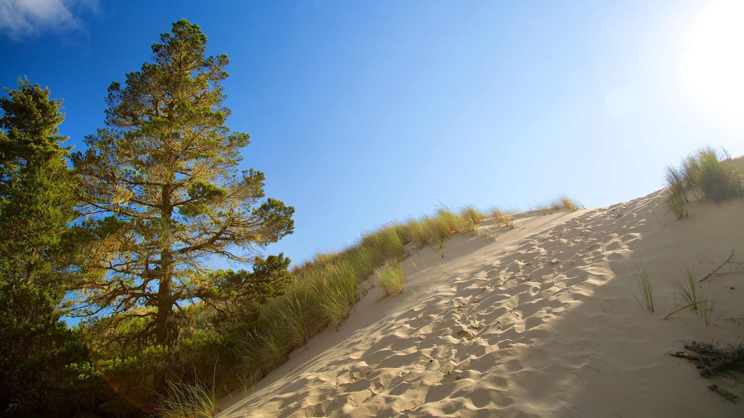 Bordered by the Pacific Ocean and surrounded by lakes and lush forests, this expanse of towering sand dunes is a truly spectacular sight.