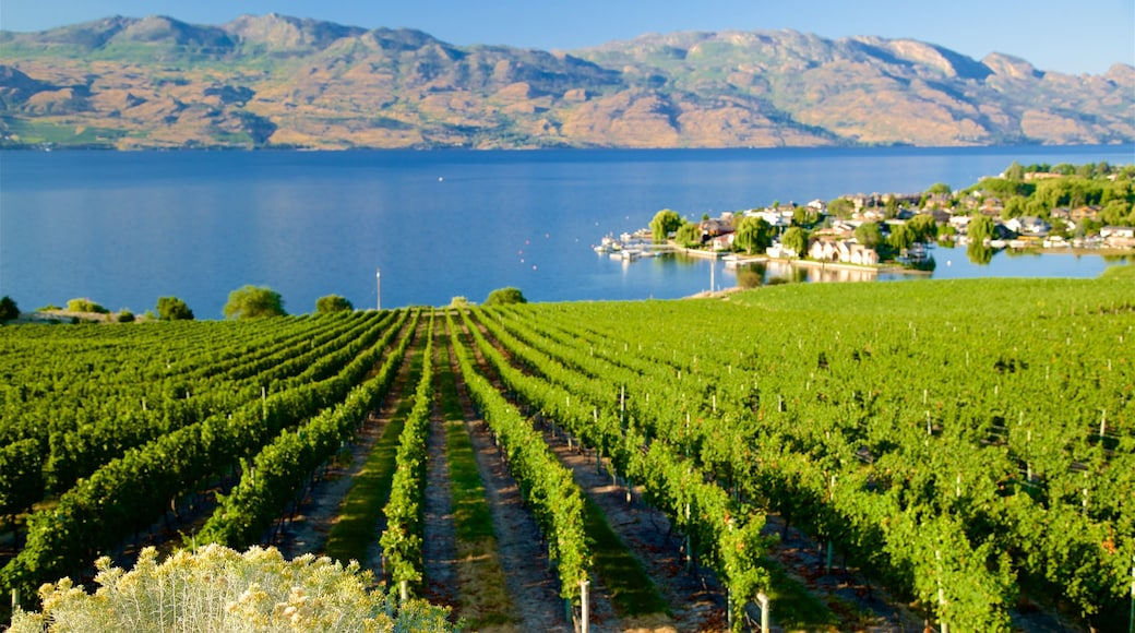 Quails\' Gate Estate Winery featuring a river or creek and farmland