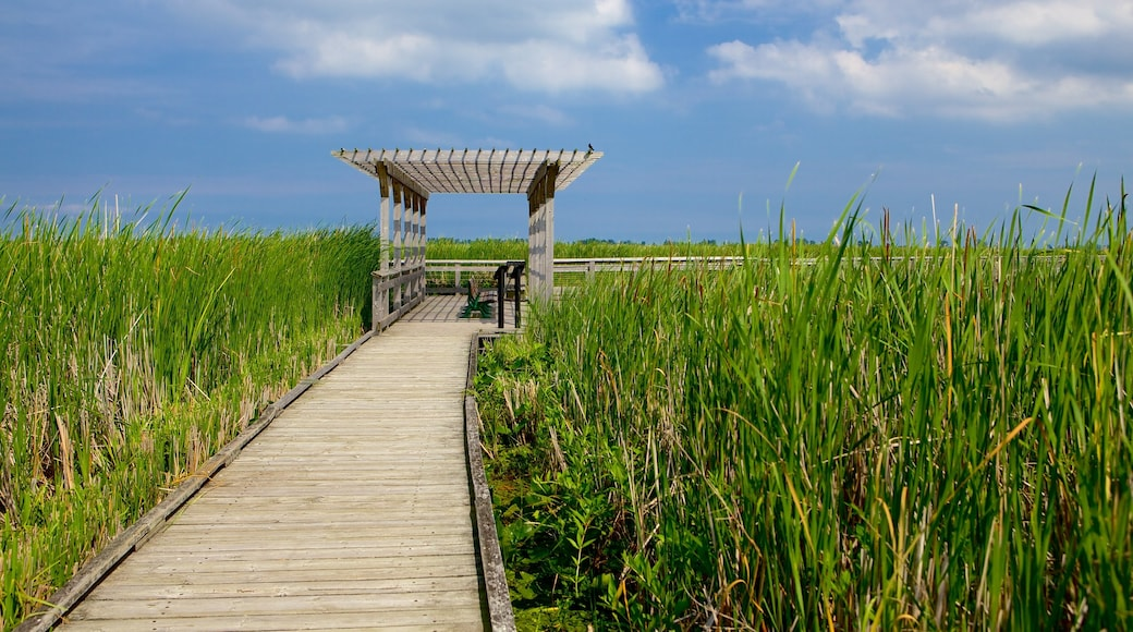 Point Pelee National Park which includes a bridge and wetlands