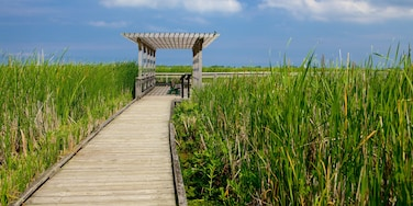 Point Pelee National Park which includes wetlands and a bridge