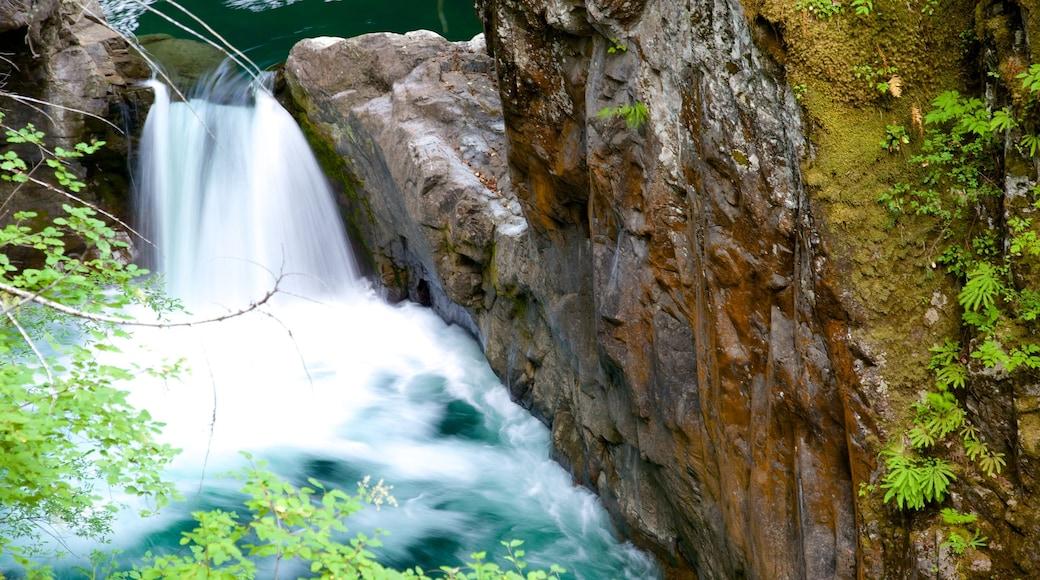 Little Qualicum Falls Provincial Park showing a cascade