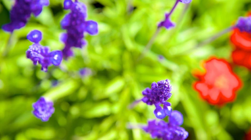 Parksville Beach featuring flowers