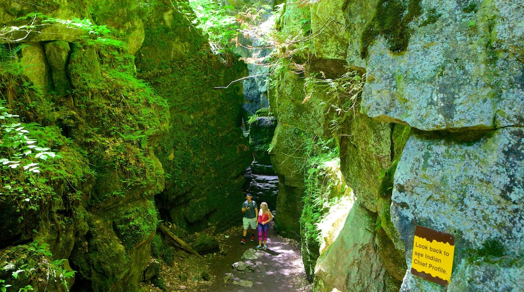 Collingwood Scenic Caves showing caving and caves