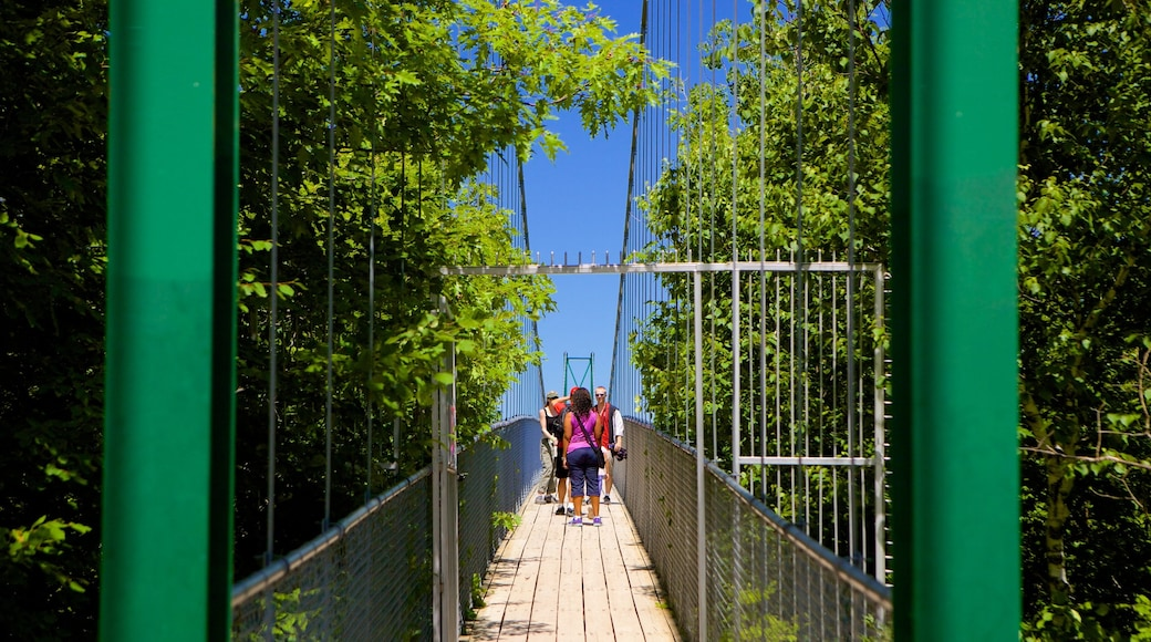 Collingwood Scenic Caves showing a bridge and a suspension bridge or treetop walkway as well as a small group of people