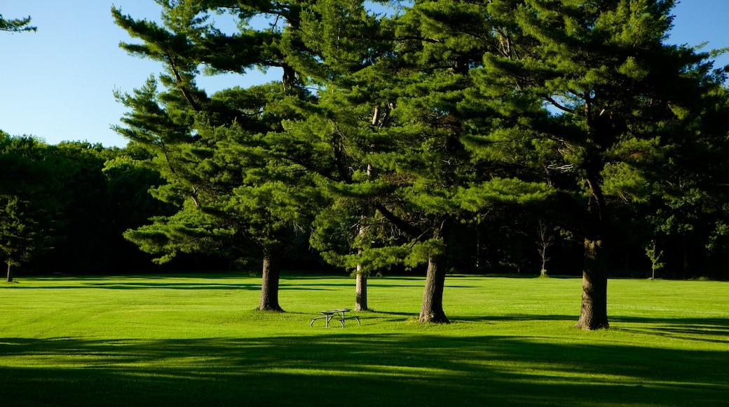 Barrie Arboretum at Sunnidale Park showing a garden