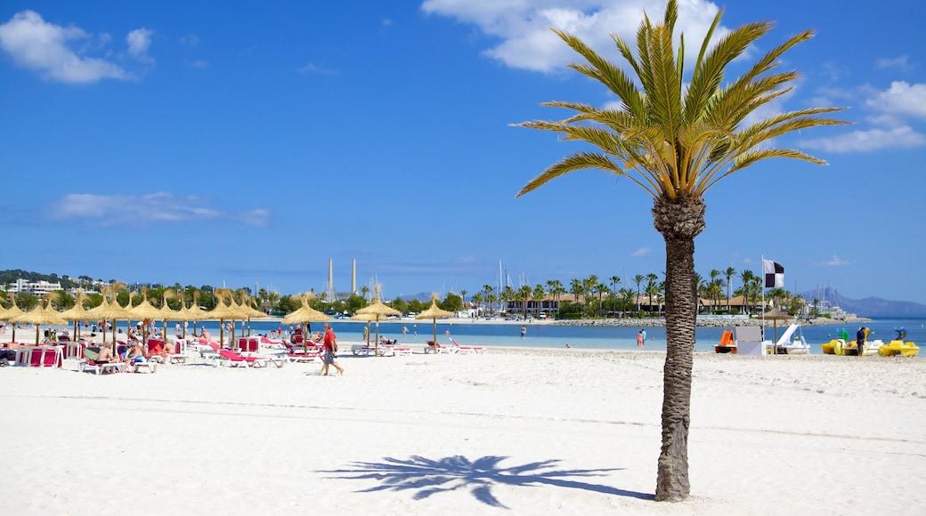 Alcúdia welches beinhaltet tropische Szenerien und Strand