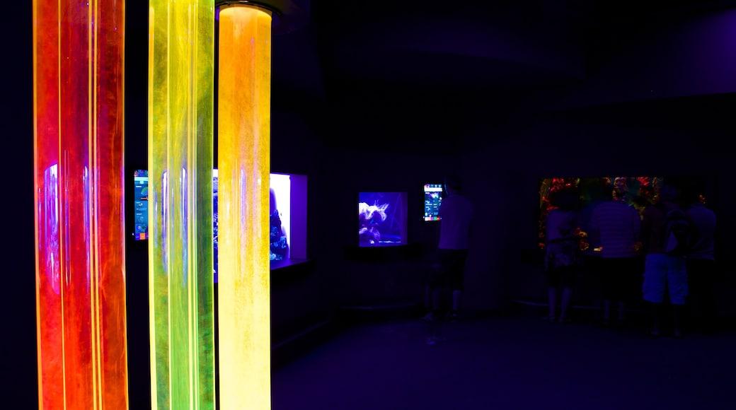 Palma Aquarium showing marine life and interior views