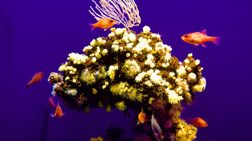 Palma Aquarium featuring marine life and colourful reefs