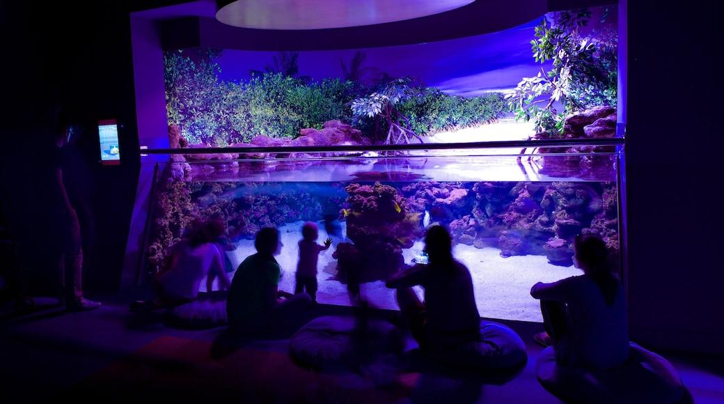 Palma Aquarium which includes interior views and marine life