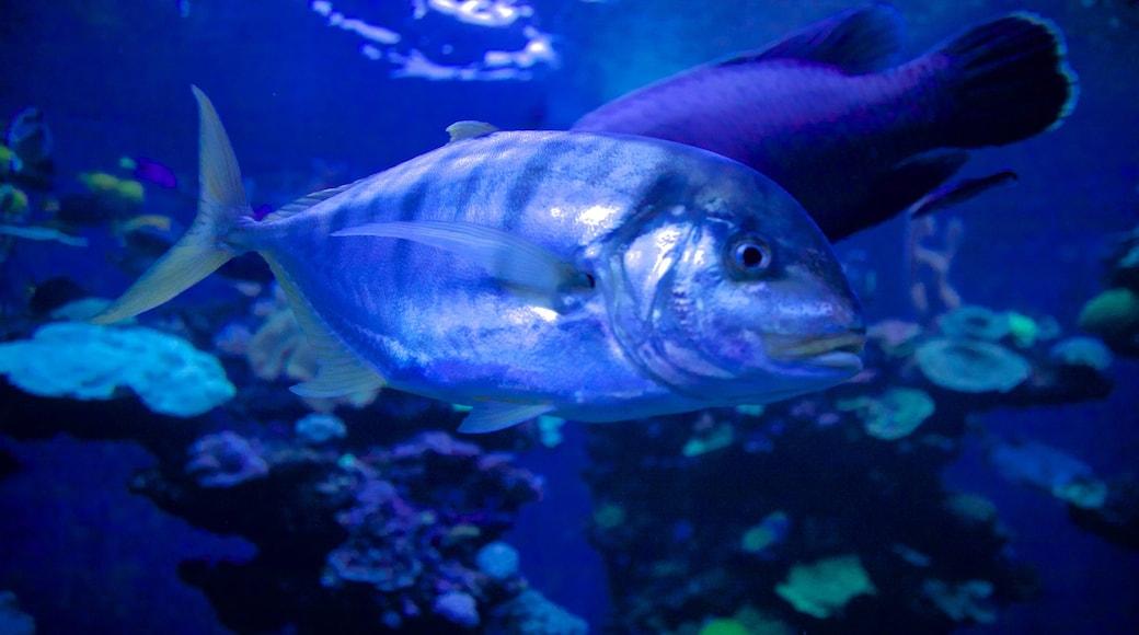 Palma Aquarium which includes marine life