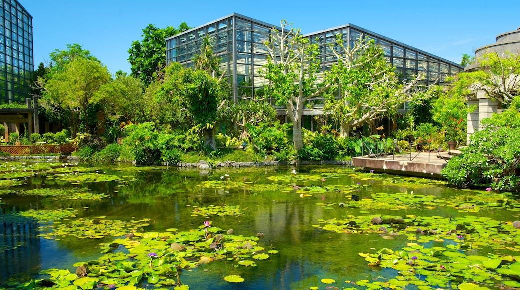 沖繩 其中包括 池塘, 花園 和 現代建築