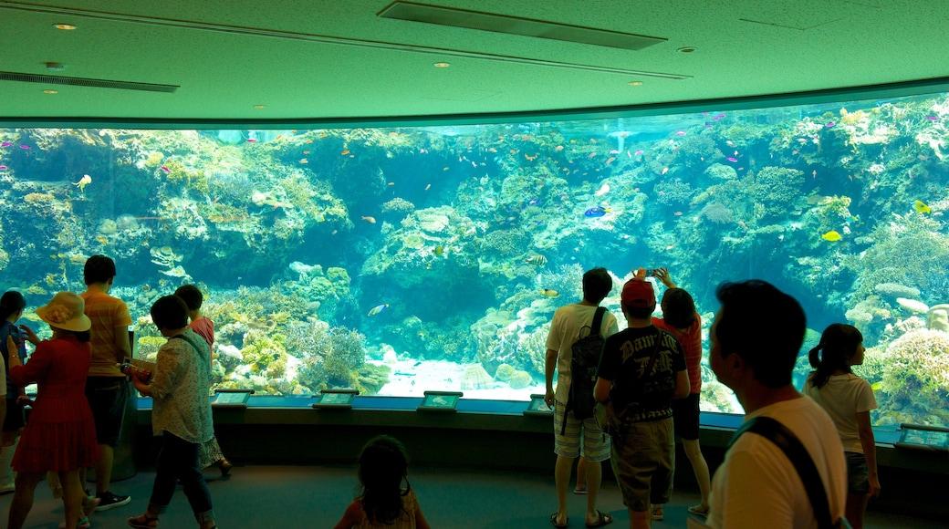 오키나와 추라우미 수족관 이 포함 해양 생물 과 실내 전경