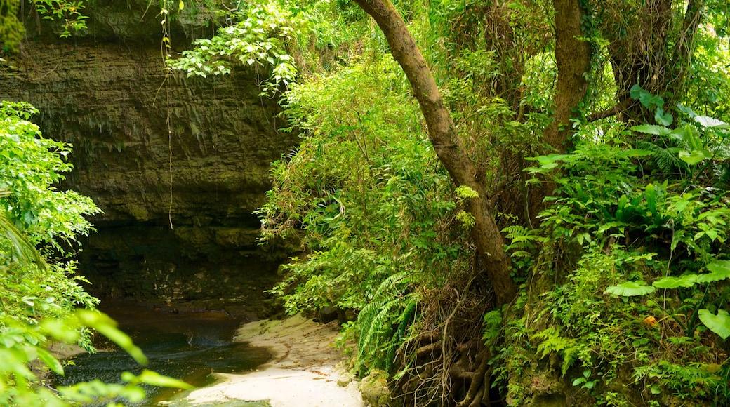 오키나와 이 포함 숲 풍경