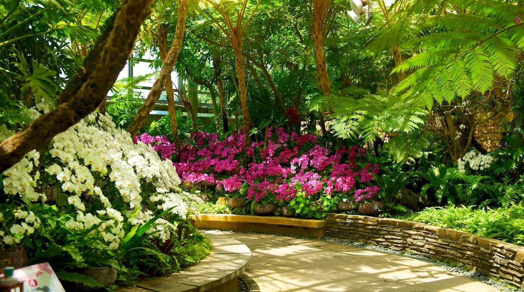 Okinawa welches beinhaltet Garten