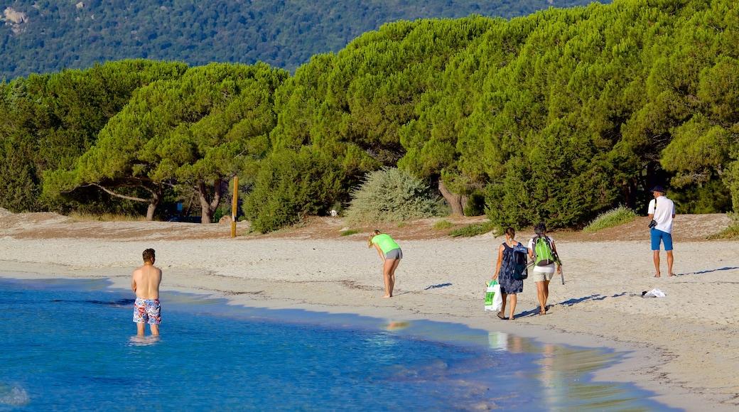 Plage de Santa Giulia montrant plage de sable aussi bien que petit groupe de personnes