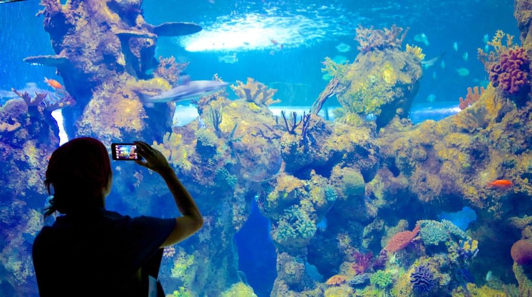 Nationalaquarium Malta welches beinhaltet Korallen, Meeresbewohner und Innenansichten