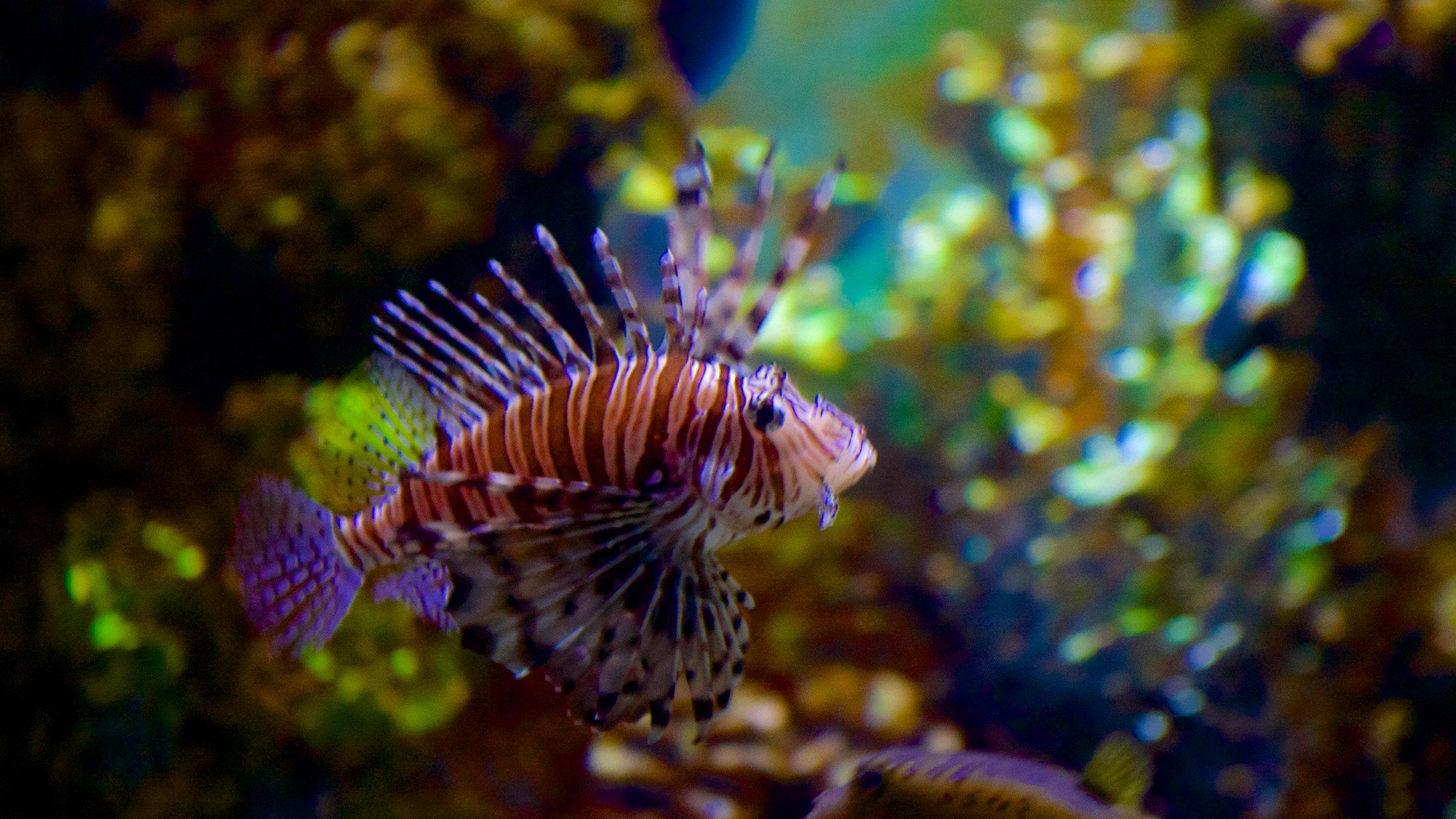 Erleben Sie in diesem modernen Aquarium im malerischen Qawra die hübschen einheimischen Fische aus den Gewässern Maltas aus nächster Nähe.