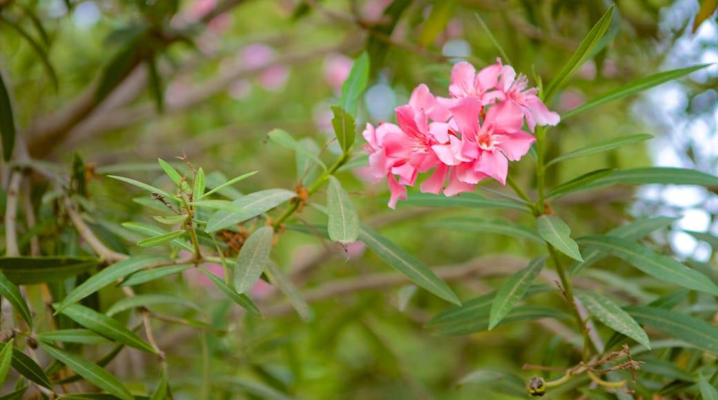 Giardini di Barrakka inferiore caratteristiche di fiori