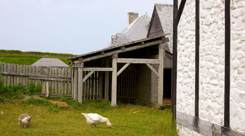 Fortress Louisbourg National Historic Site featuring bird life