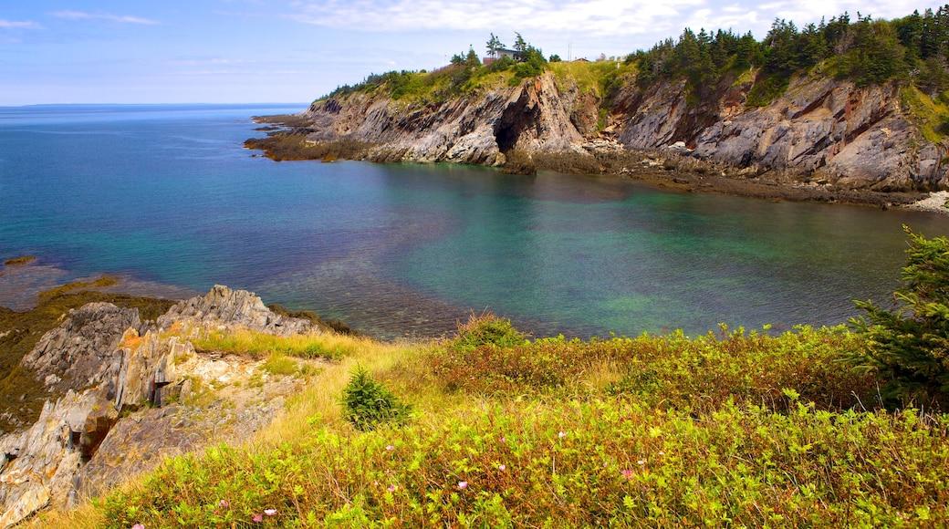 Smuggler\'s Cove showing rocky coastline