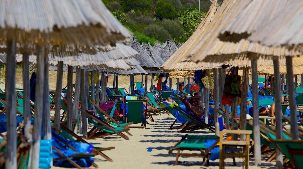 Playa Campus que incluye una playa de arena