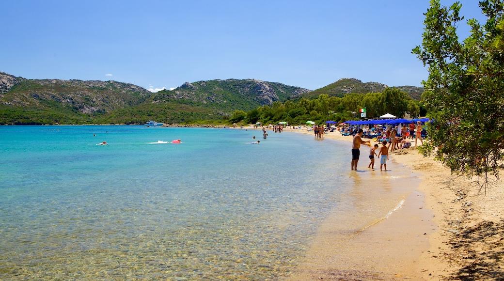 Playa Le Saline mostrando escenas tropicales, una playa y natación