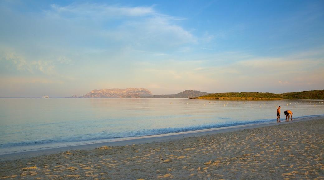 Plage de Pittulongu qui includes plage de sable