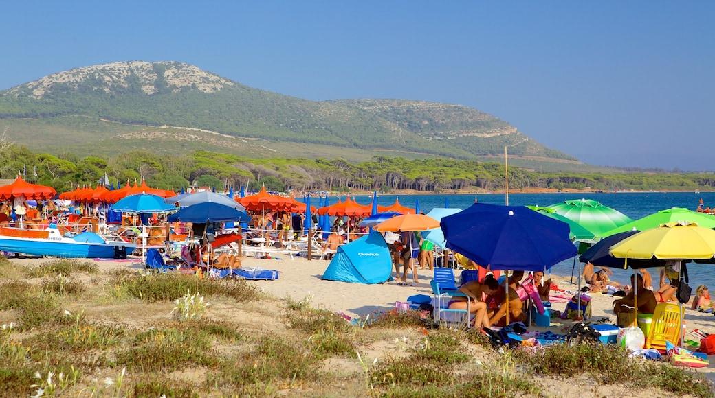 หาด Mugoni เนื้อเรื่องที่ ชายหาด