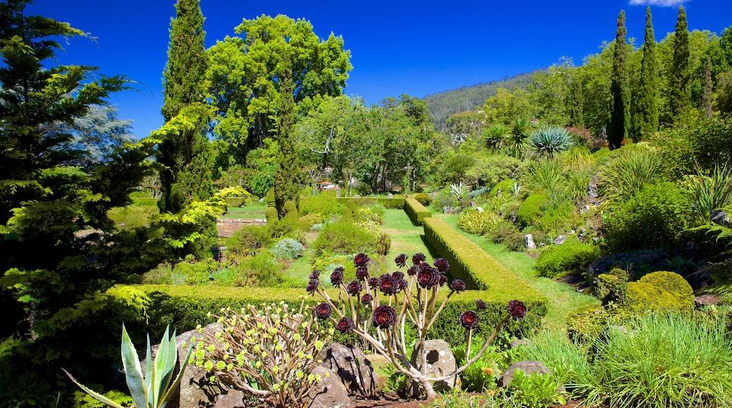 Palheiro Gardens featuring a garden