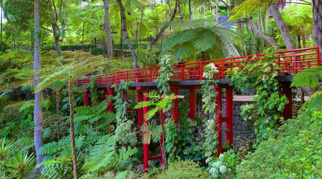 Tuinen Monte Palace inclusief een hangbrug of boomtoppenpad, een brug en regenwoud