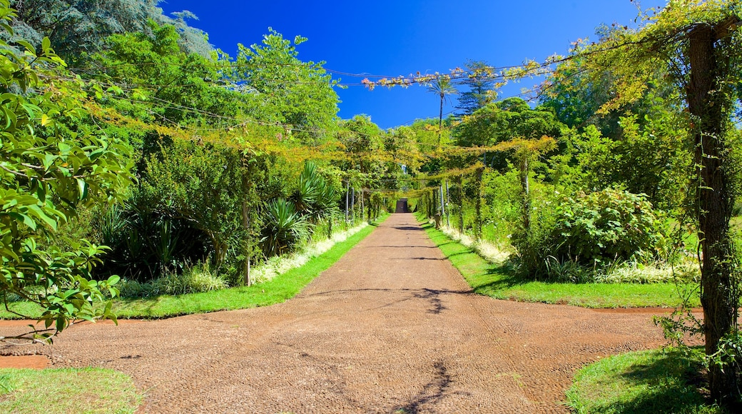 Palheiro Gardens showing a garden