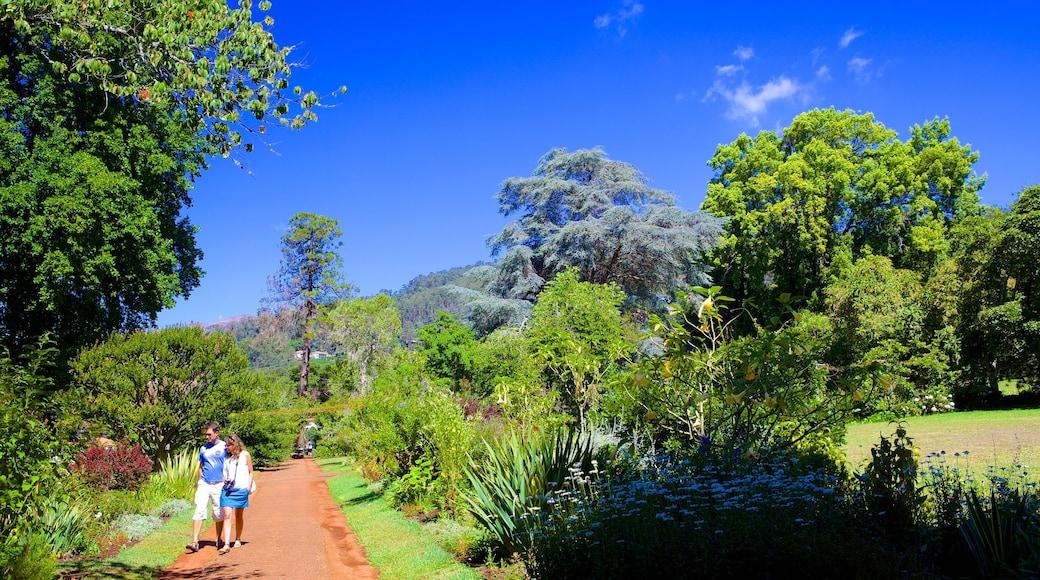 Palheiro Gardens showing a park
