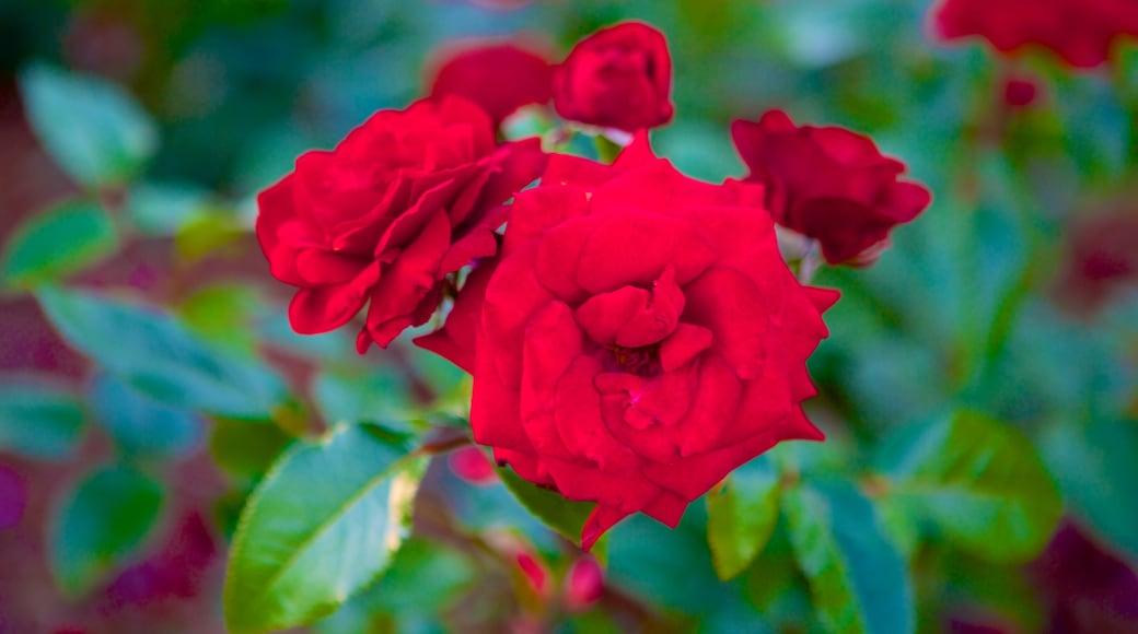 엘리자베스 파크 이 포함 야생화 과 꽃