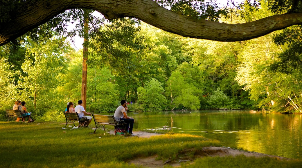엘리자베스 파크 을 특징 연못 과 공원 뿐만 아니라 소규모 사람들