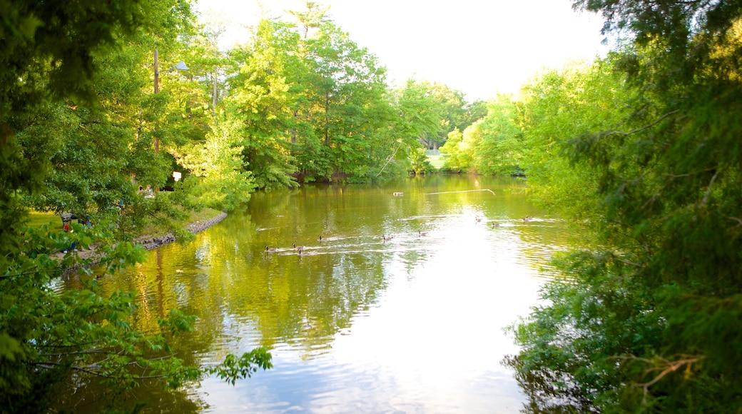 엘리자베스 파크 을 특징 공원 과 연못