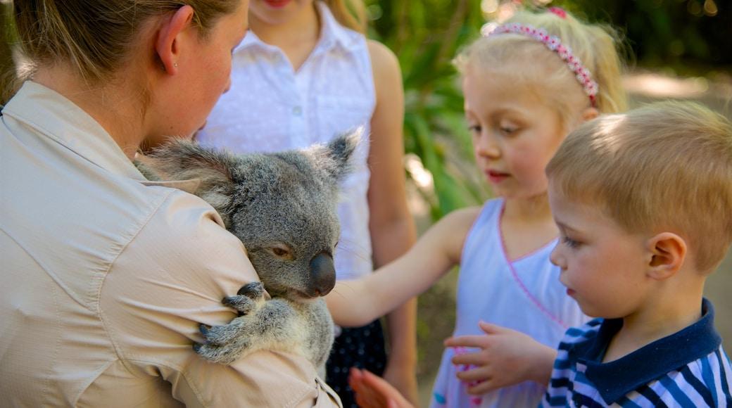 Australia Zoo das einen niedliche oder freundliche Tiere und Zootiere sowie Kinder