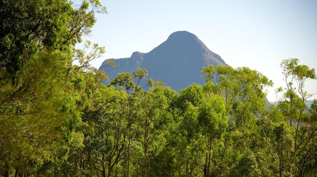 Glasshouse Mountains National Park mit einem Berge und Wälder