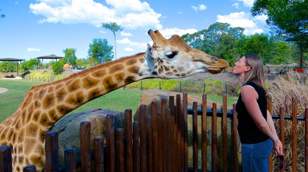 Australia Zoo welches beinhaltet Zootiere und Landtiere sowie einzelne Frau