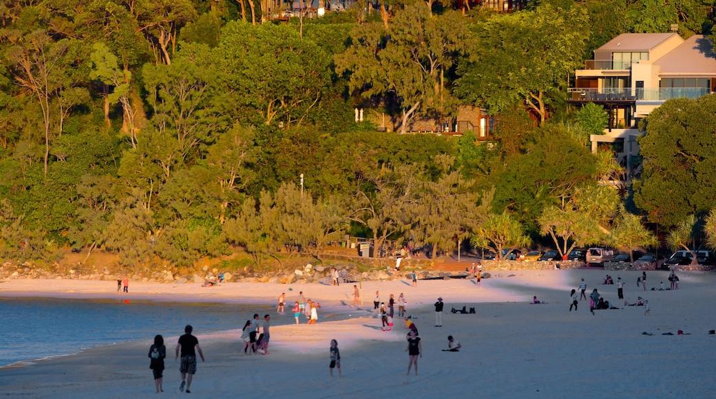 Noosa Beach showing a coastal town, a beach and a sunset