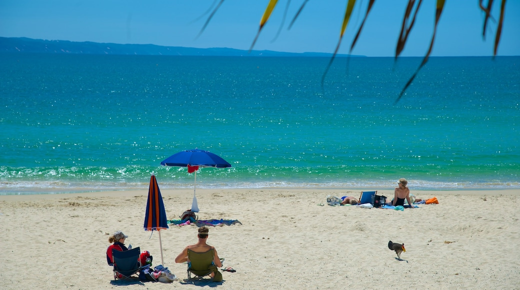 Noosa Beach showing a sandy beach as well as a small group of people