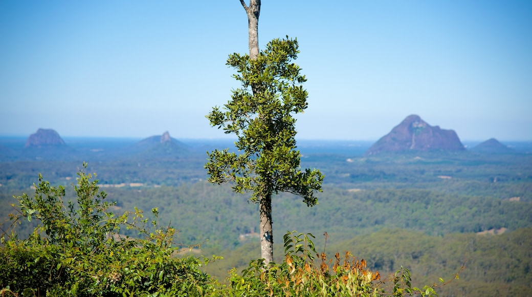 Maleny Botanic Gardens showing landscape views and forests